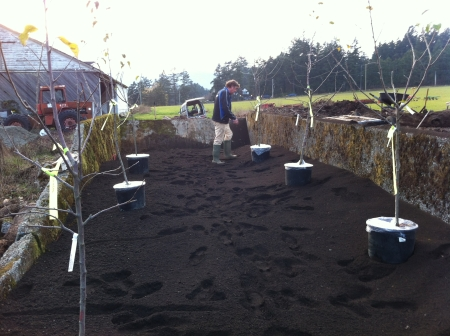 First six trees roughly in place, ready for planting