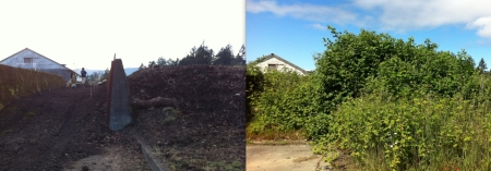Today, and a reminder of all the blackberries that have been removed since the summer.