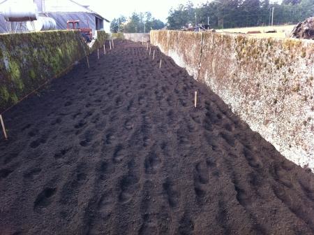 footprints in the dirt