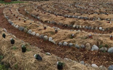 potsandplantsj