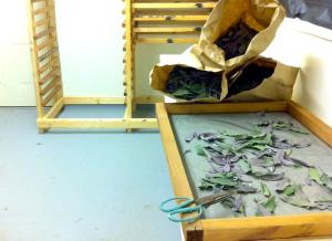dryingroom