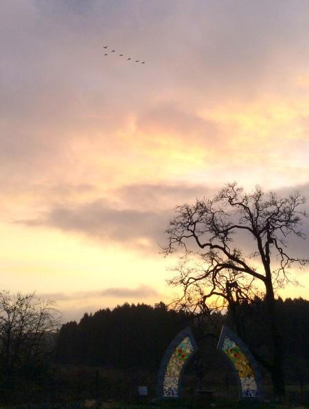 solsticegeese