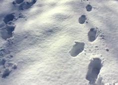footprintsonsnowday